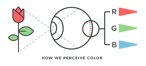 Colorblind causes diagram